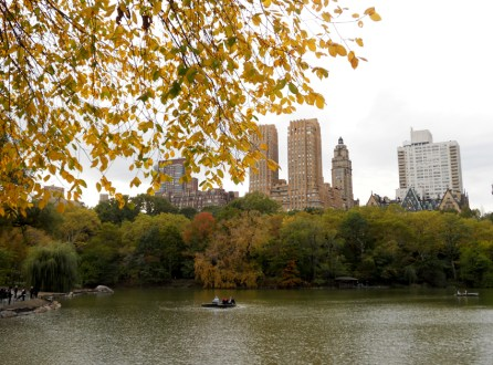 Autumn Leaves in Central Park