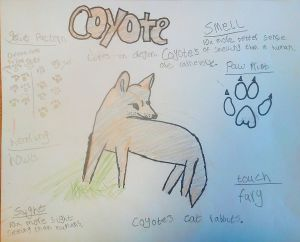 Student Journal, coyote