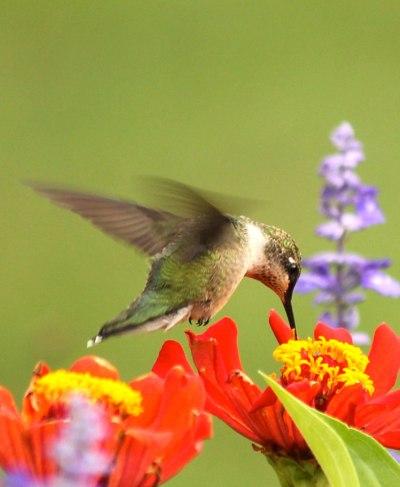 Rogue Valley Audubon Society