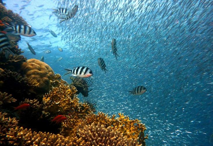 Cozumel diving image