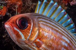 Squirrelfish could be called Punkfish I think.