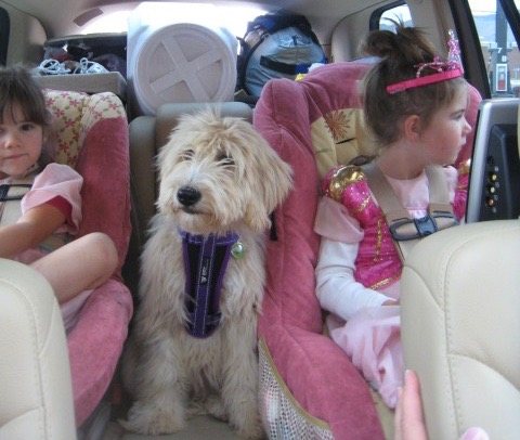 girls and Flossie in the car; podcasts article