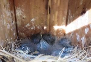 Cozy Hideaway Babies