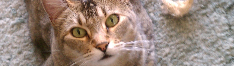Cozy Kitties Inn in Kent, WA is a cat only boarding facility