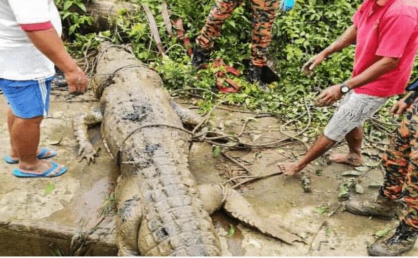 بالصور.. استخراج رفات شاب مفقود من بطن تمساح