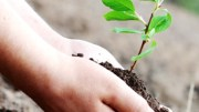 Environmental protection is imbibed in Indian values
