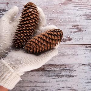 Bring winter indoors