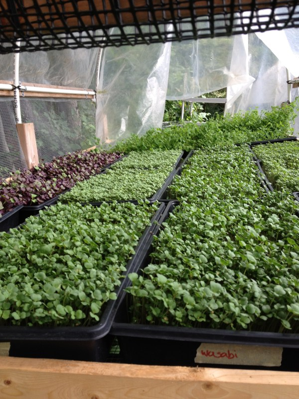 production cornell small farms program - HD2448×3264