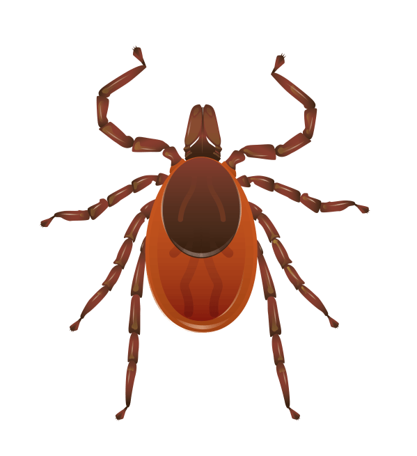 ticks new york state integrated pest management - HD 3951×4318