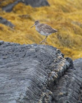 Piper, Blue Rocks, NS