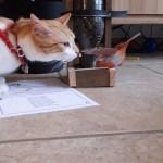 mangeoire de Noam avec Caramel le chat