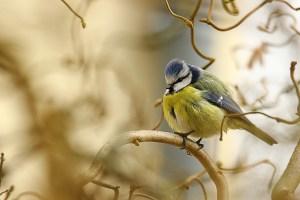 20201028 - Les oiseaux en hiver @ Les Thermes - Evaux les Bains   Évaux-les-Bains   Nouvelle-Aquitaine   France