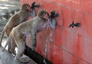 Приматы хорошо умеют работать с потоками