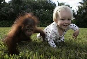 Приматы не любят решать поисковые задачи в одиночку.  Решать задачу вдвоём ничуть не легче, но интереснее.