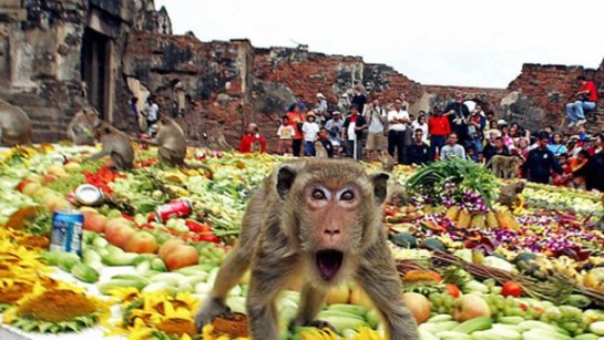 Приматы очень любят заниматься сортировкой. Это увлекательно, полезно, а иногда и вкусно.