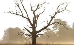 [Базовый олимпиадный курс] Занятие 4. Остовные деревья