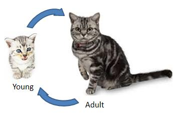 Stages In A Life Cycle Nexusp3science