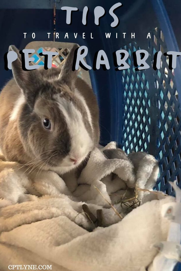 How To Travel With A Rabbit By Train: A guide