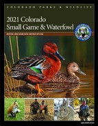 Colorado Small Game & Waterfowl brochure