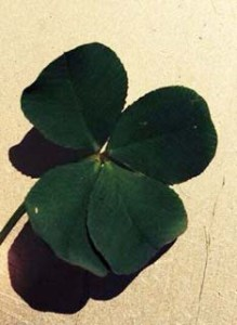 Four-leaf clover for luck