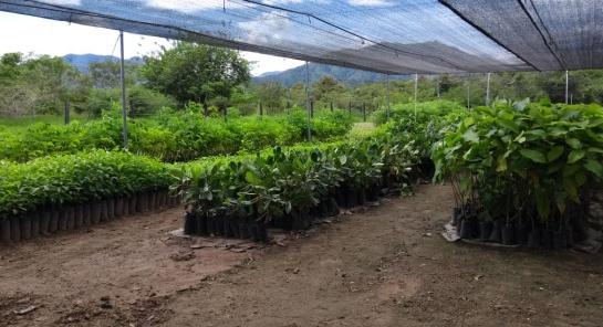 Parques Naturales: Colombia tendrá más de 11.000 hectáreas restauradas de bosque seco tropical