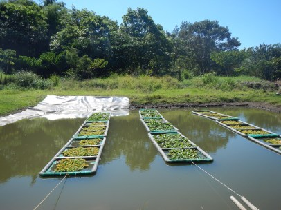 Floating Mat Wetland