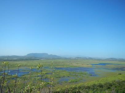 Natural Wetlands of Palo Verde