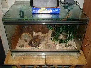 A proper hermit crab habitat