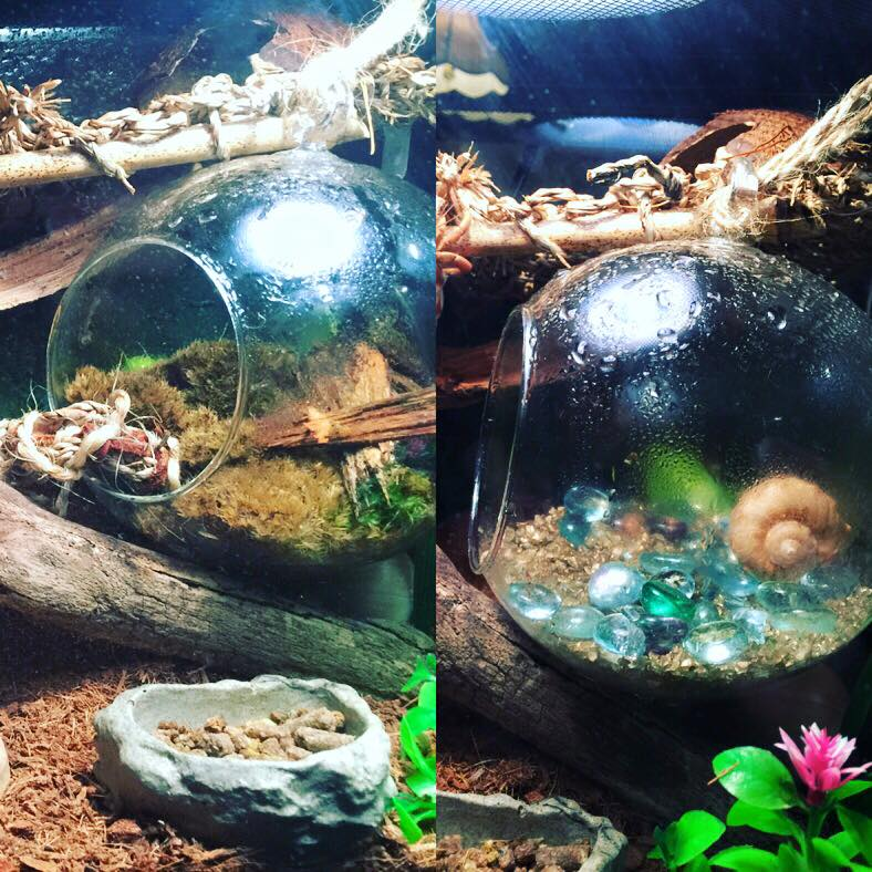 A Guide For Setting Up A Large Crabitat On A Budget The Crab