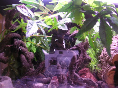 DIY Mangrove tree for hermit crab crabitat