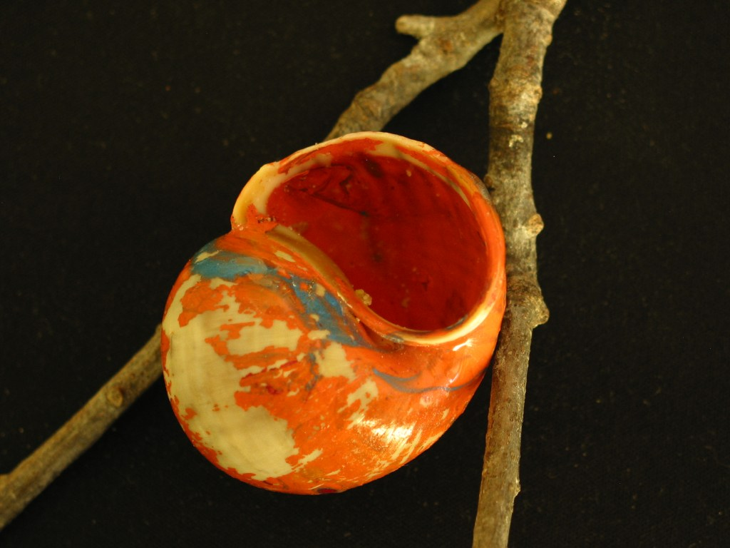 Painted shell by John Alpaugh