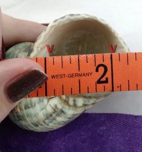 Measuring hermit crab shells