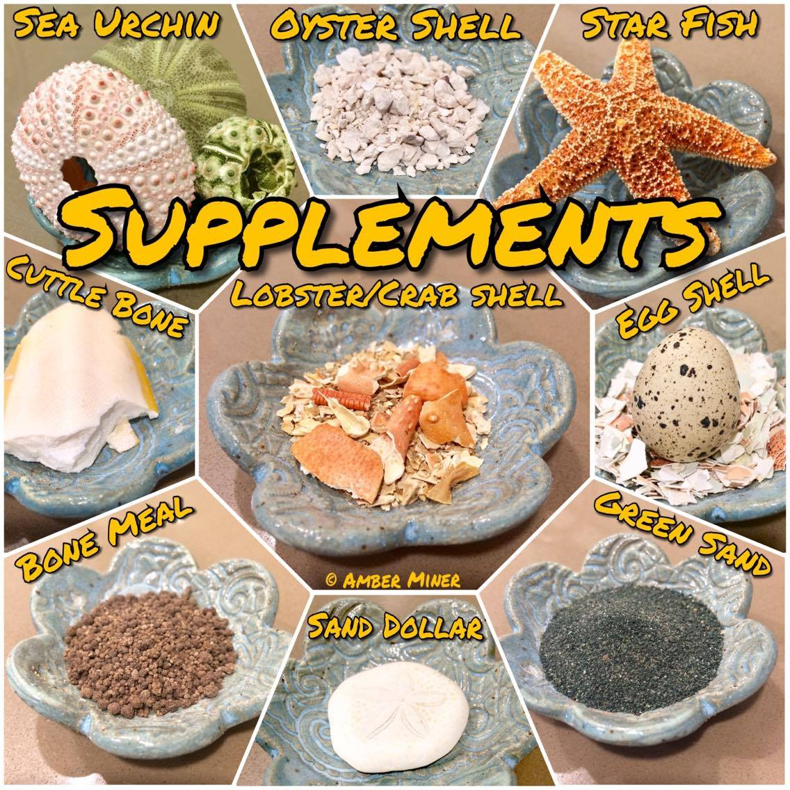 Supplements for hermit crabs