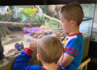 two boys looking into a hermit crab habitat
