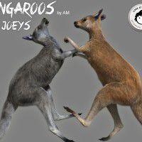 DAZ3D ~ Poser : Kangaroos and Joeys