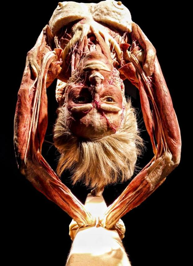 BODY WORLDS in Calgary