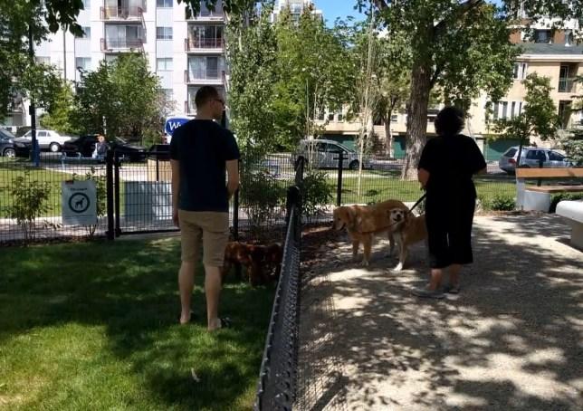 Connaught Dog Park Fence