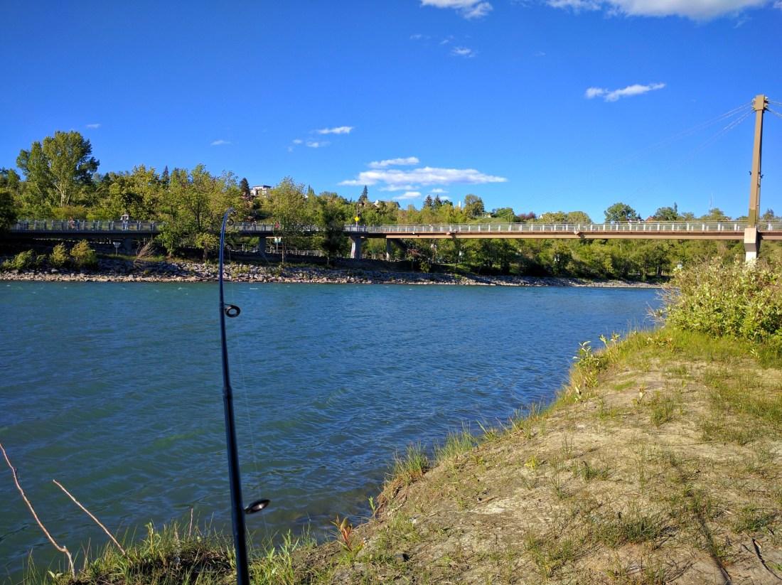 Fishing Around Calgary, Bow River Downtown Calgary
