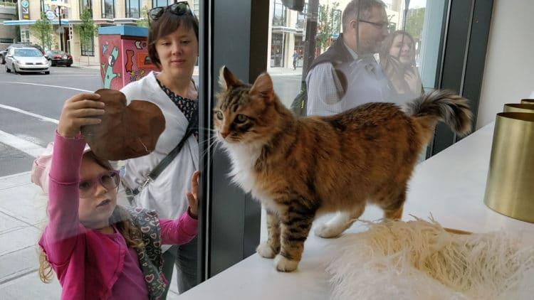 Regal Cat Cafe windows
