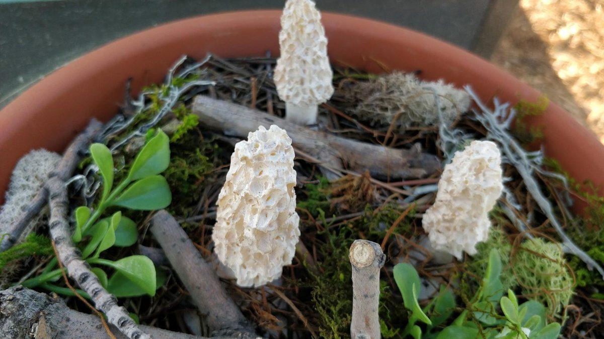 Granary Road Mushrooms