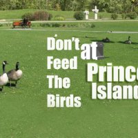 Don't Feed Bread To The Birds At Princes Island Park
