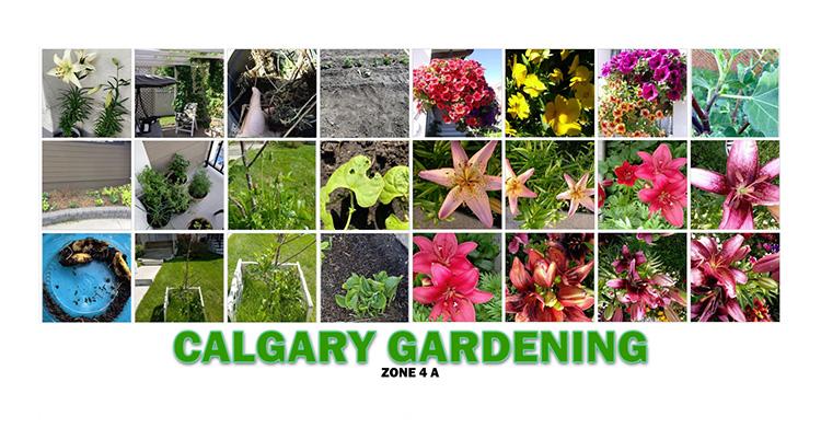Calgary Groups Calgary Gardening