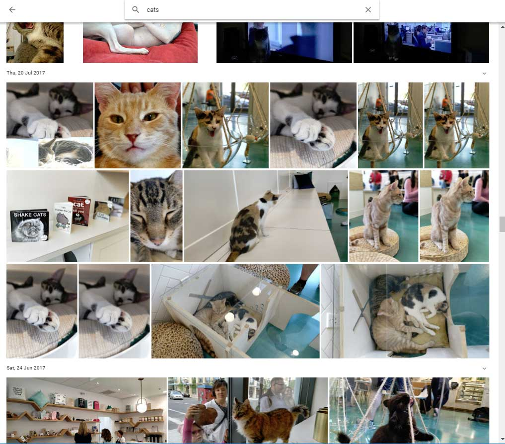 Google Photos searching cats
