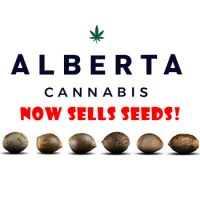 Where To Buy Cannabis seeds in Alberta