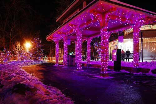 Calgary Zoo Lights Colours