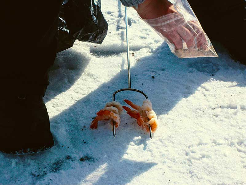 Ice Fishing food snacks Shrimp with seasoning