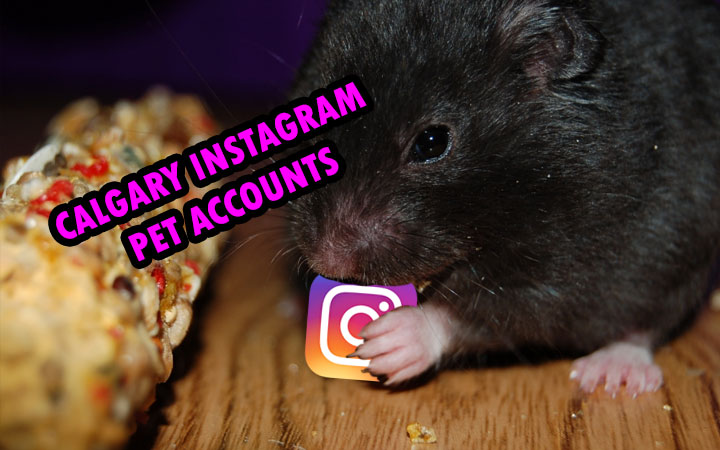 Calgary Instagram Pet Accounts  Dogs, Cats, and cuteness!
