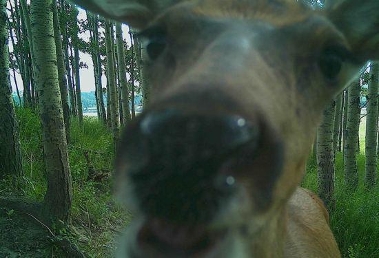 Calgary Captured Wildlife Identification