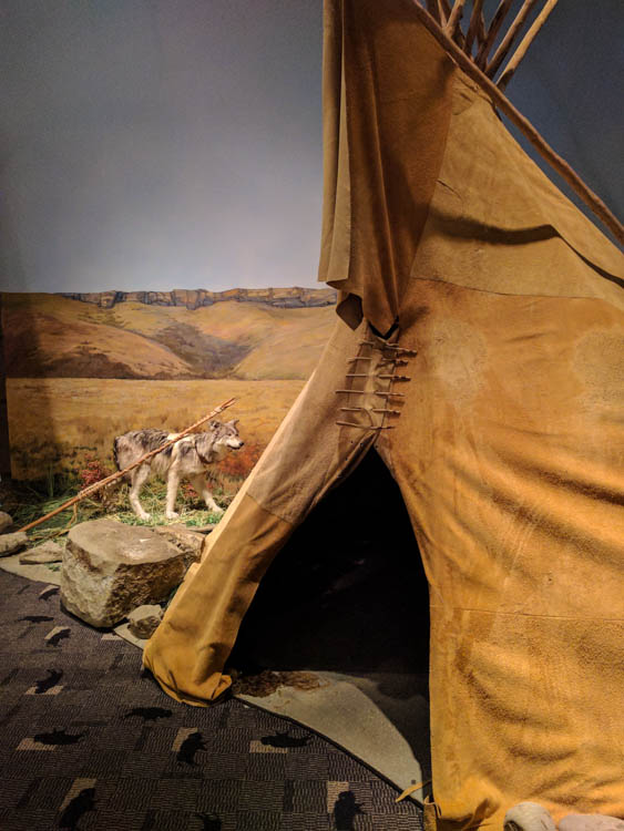 Head-Smashed-In Buffalo Jump Wolf Teepee