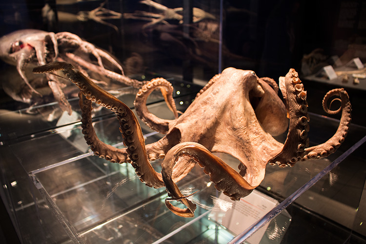 TELUS Spark BODY WORLDS Animal Inside Out Octopus